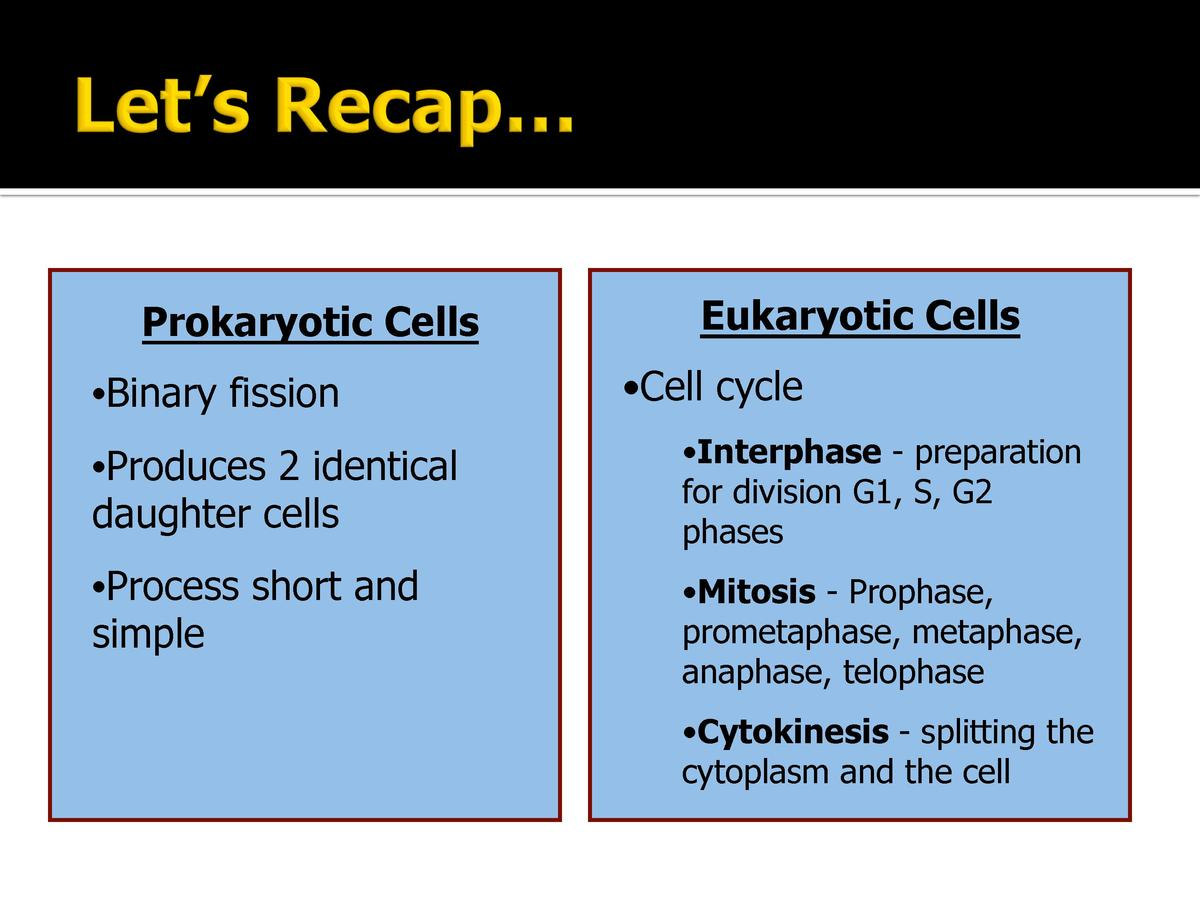 Prokaryotic Cells       Binary fission  Eukaryotic Cells       Cell cycle        Produces 2 identical daughter cells      ...