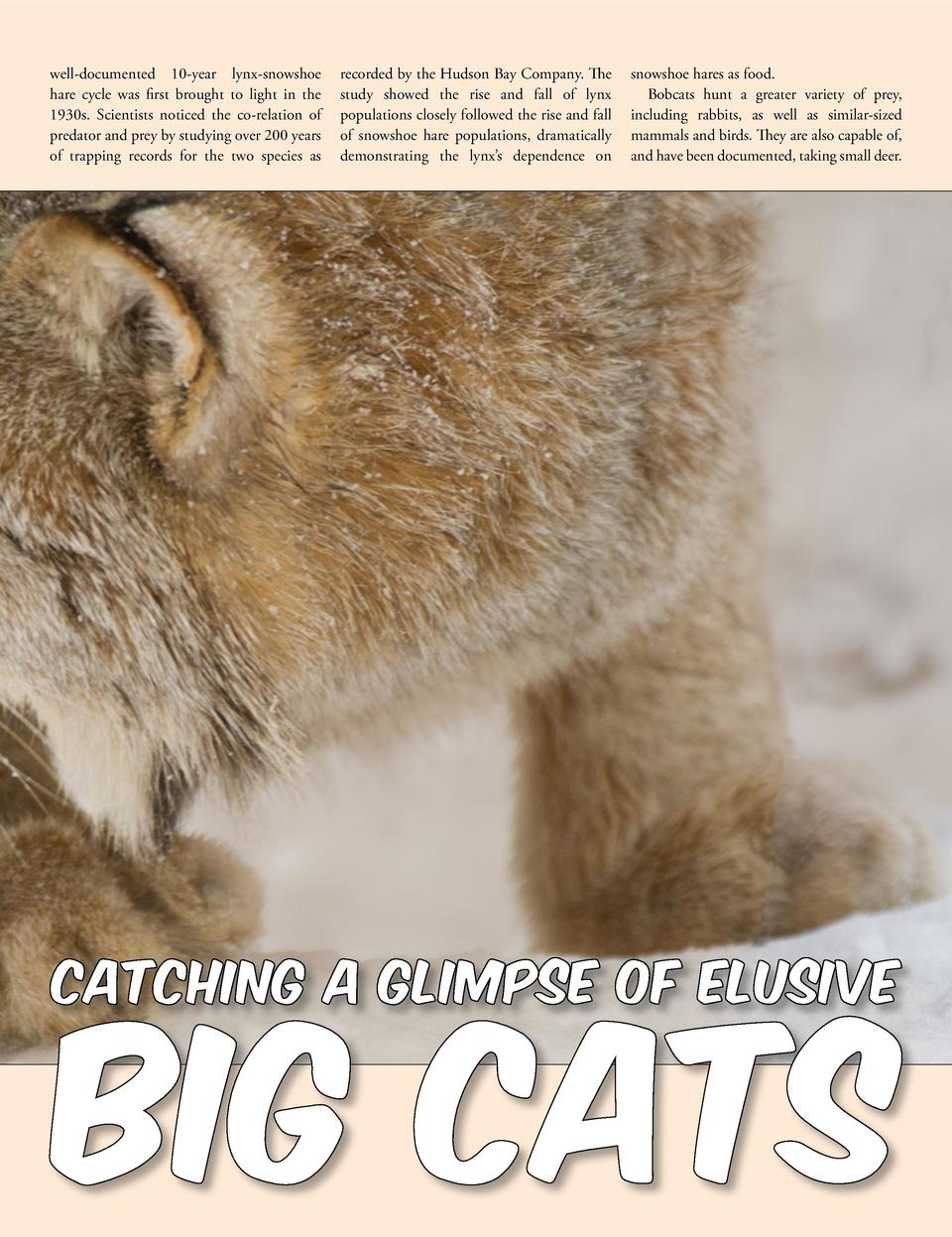 well-documented 10-year lynx-snowshoe hare cycle was first brought to light in the 1930s. Scientists noticed the co-relati...