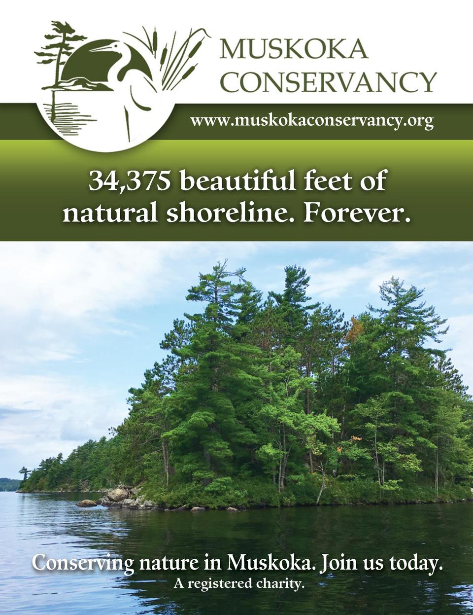 www.muskokaconservancy.org  34,375 beautiful feet of natural shoreline. Forever.  Conserving nature in Muskoka. Join us to...