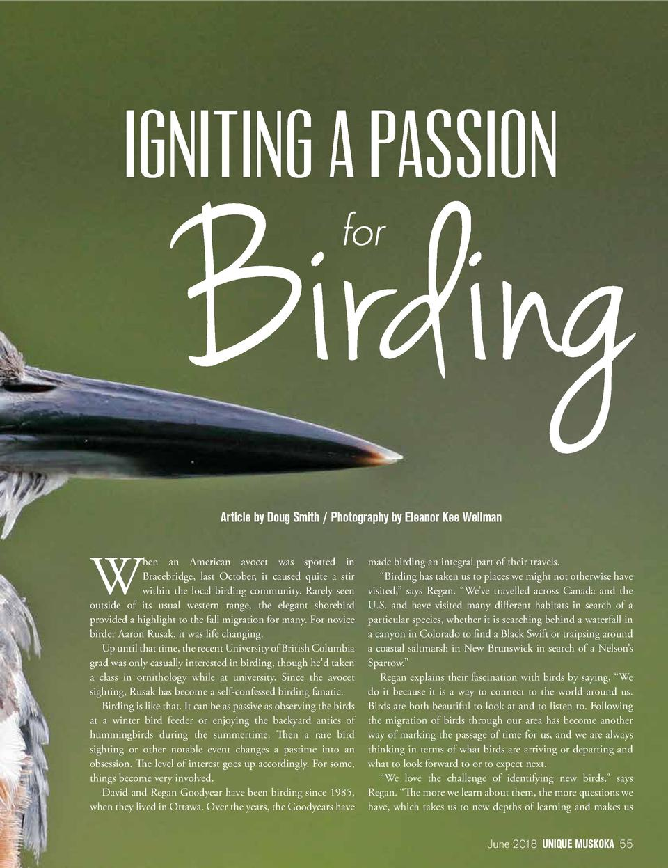 Article by Doug Smith   Photography by Eleanor Kee Wellman  W  hen an American avocet was spotted in Bracebridge, last Oct...