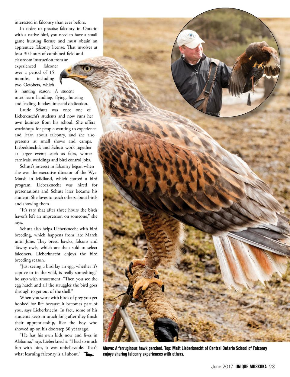 interested in falconry than ever before. In order to practise falconry in Ontario with a native bird, you need to have a s...