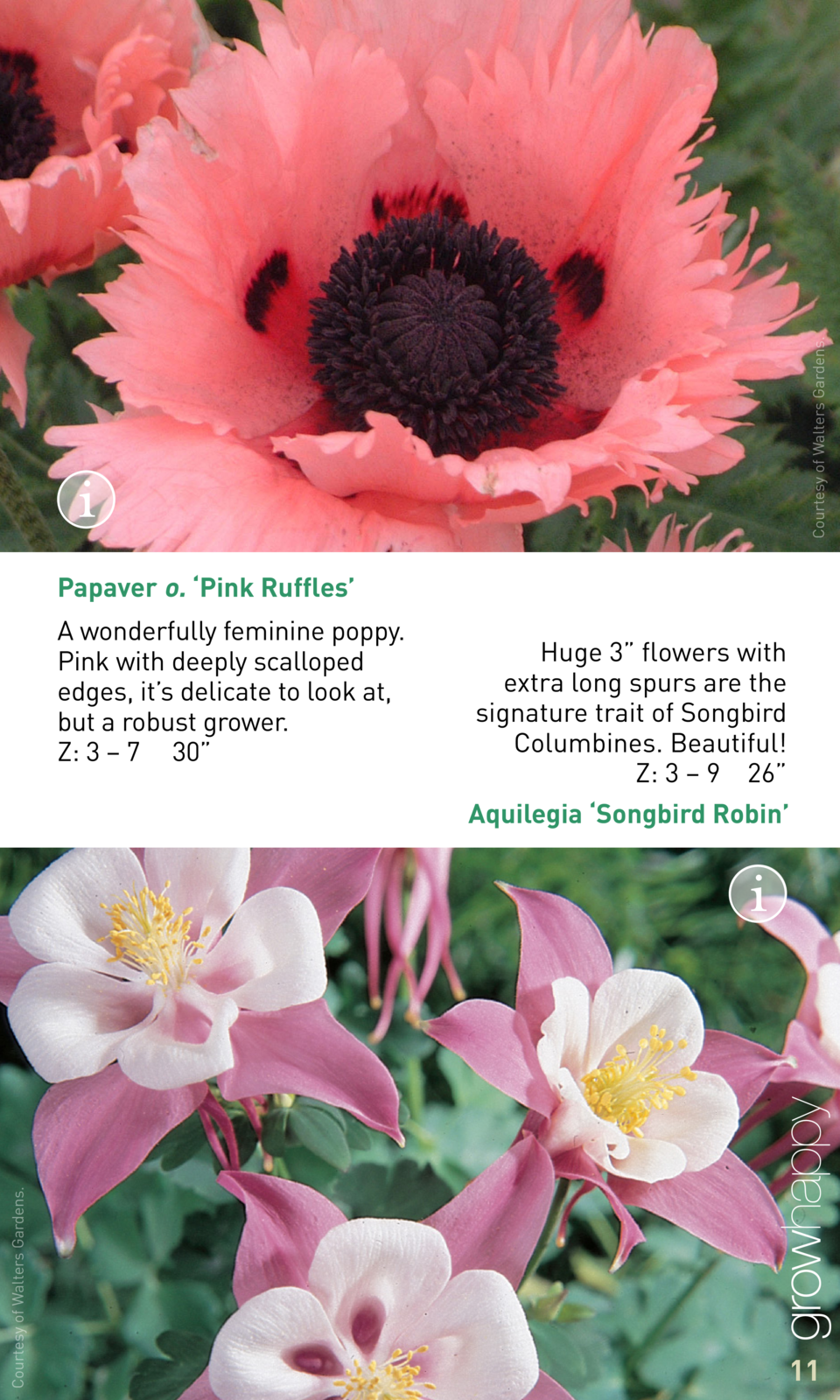 Courtesy of Walters Gardens.  Papaver o.    Pink Ruffles    A wonderfully feminine poppy. Pink with deeply scalloped edges...