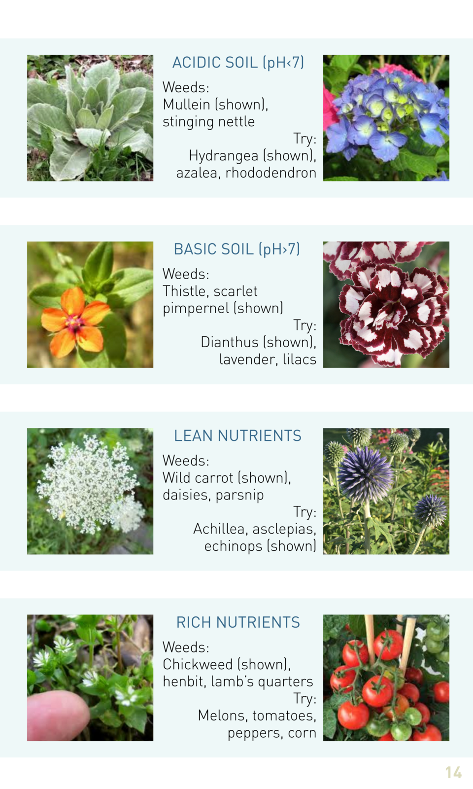 ACIDIC SOIL  pH   7  Weeds  Mullein  shown , stinging nettle  Try  Hydrangea  shown , azalea, rhododendron  BASIC SOIL  pH...