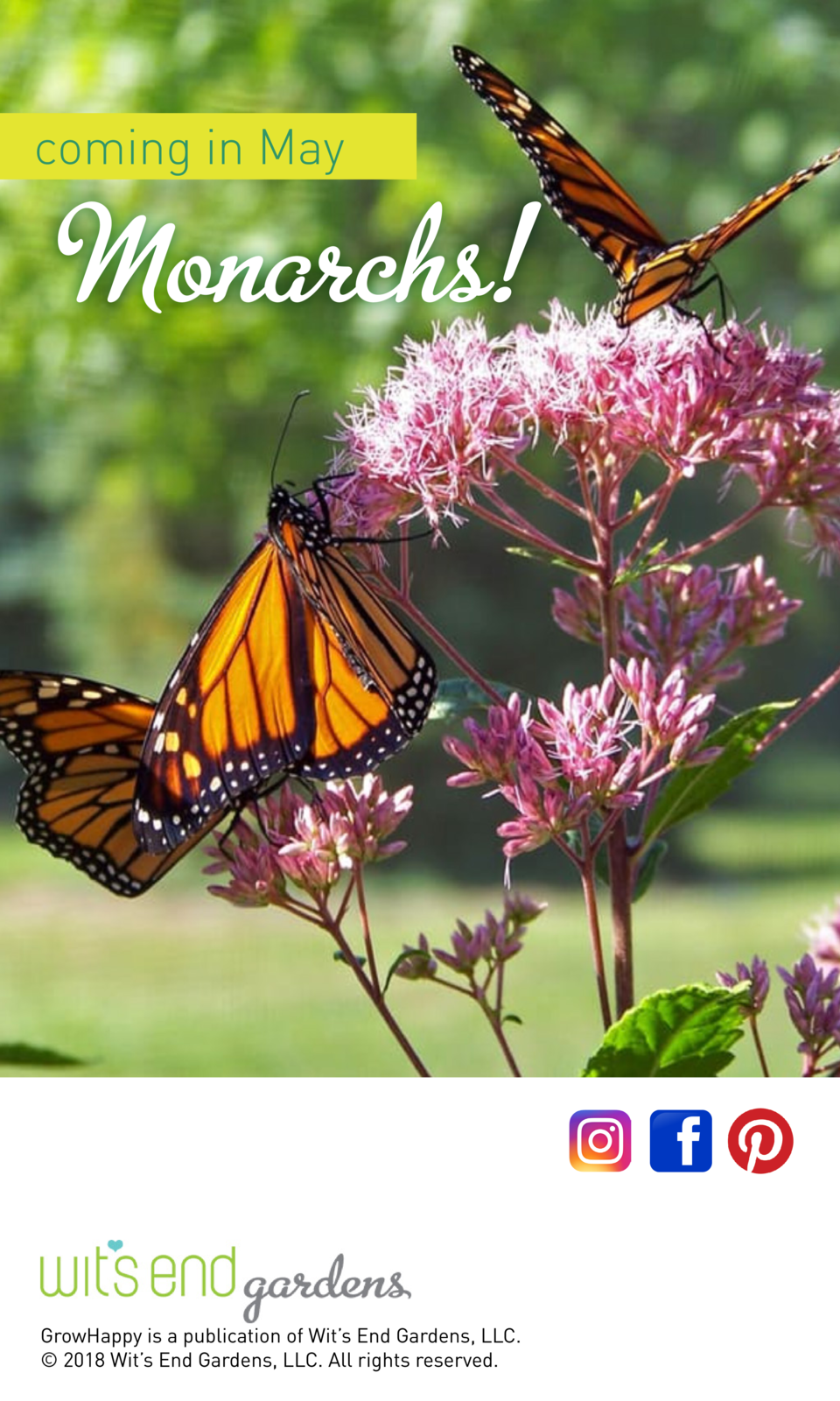 coming in May  Monarchs   GrowHappy is a publication of Wit   s End Gardens, LLC.    2018 Wit   s End Gardens, LLC. All ri...