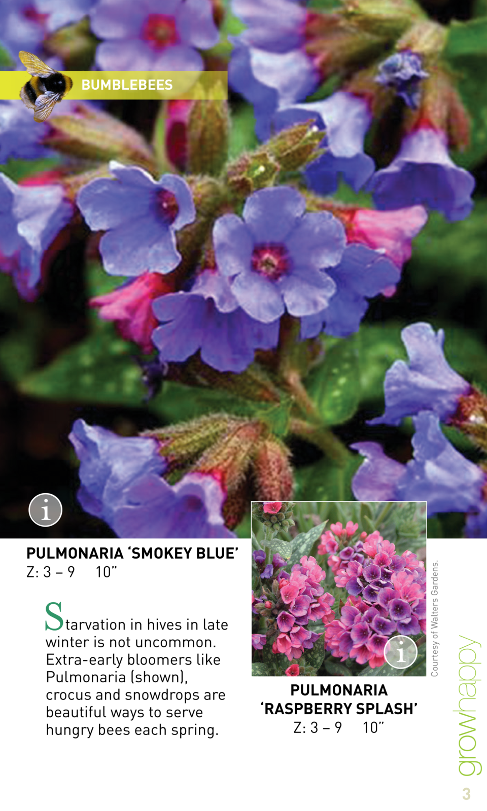 BUMBLEBEES  Courtesy of Walters Gardens.  PULMONARIA    SMOKEY BLUE    Z  3     9 10     S  tarvation in hives in late win...