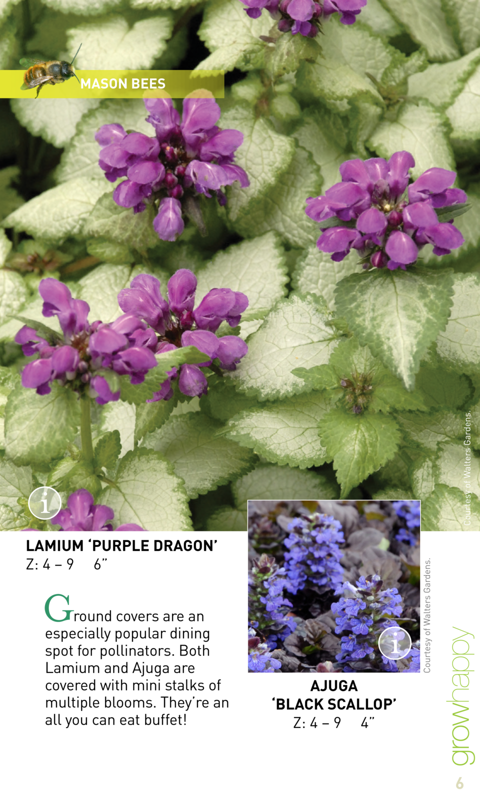 Courtesy of Walters Gardens.  MASON BEES  Courtesy of Walters Gardens.  LAMIUM    PURPLE DRAGON    Z  4     9 6     G  rou...