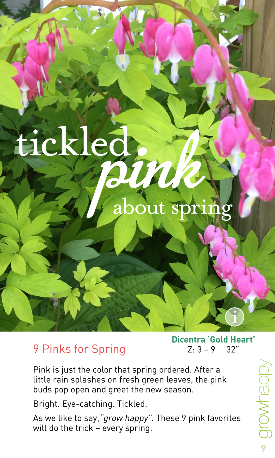 9 Pinks for Spring  Dicentra    Gold Heart    Z  3     9 32     Pink is just the color that spring ordered. After a little...
