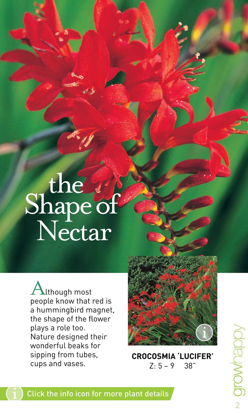 the Shape of Nectar A  lthough most people know that red is a hummingbird magnet, the shape of the flower plays a role too...