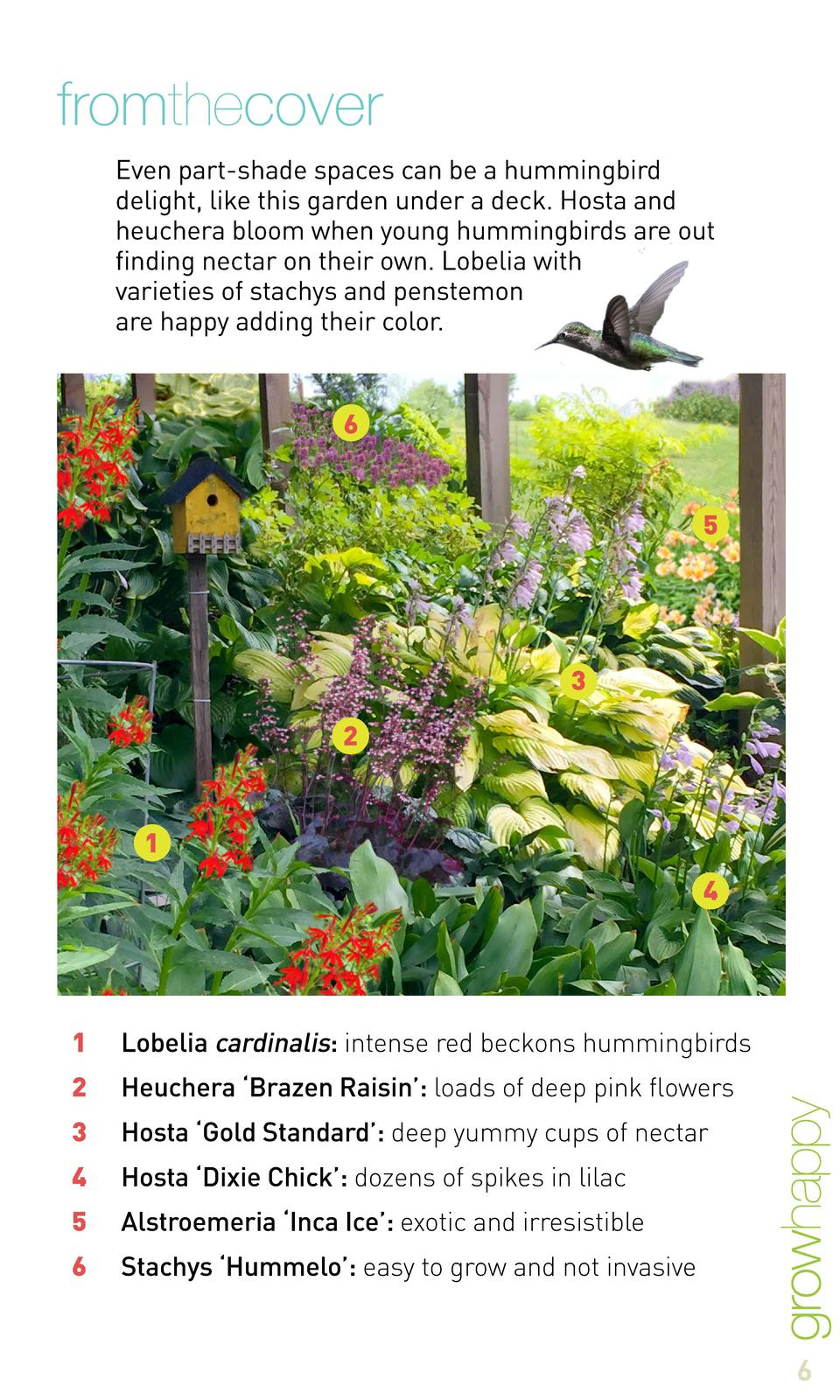 fromthecover Even part-shade spaces can be a hummingbird delight, like this garden under a deck. Hosta and heuchera bloom ...