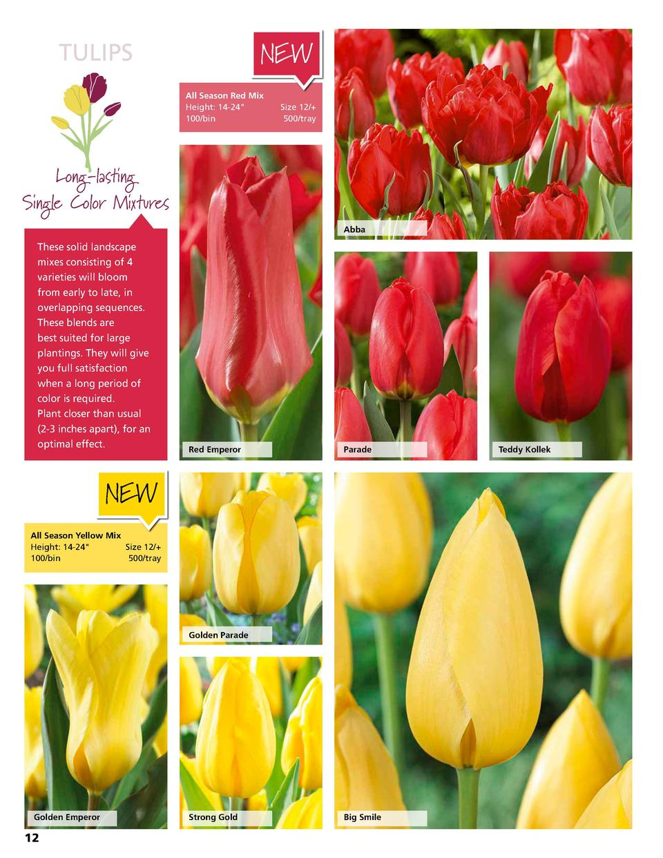 TULIPS  NEW All Season Red Mix Height  14-24   Size 12   100 bin 500 tray  Long-lasting Single Color Mixtures Abba  These ...