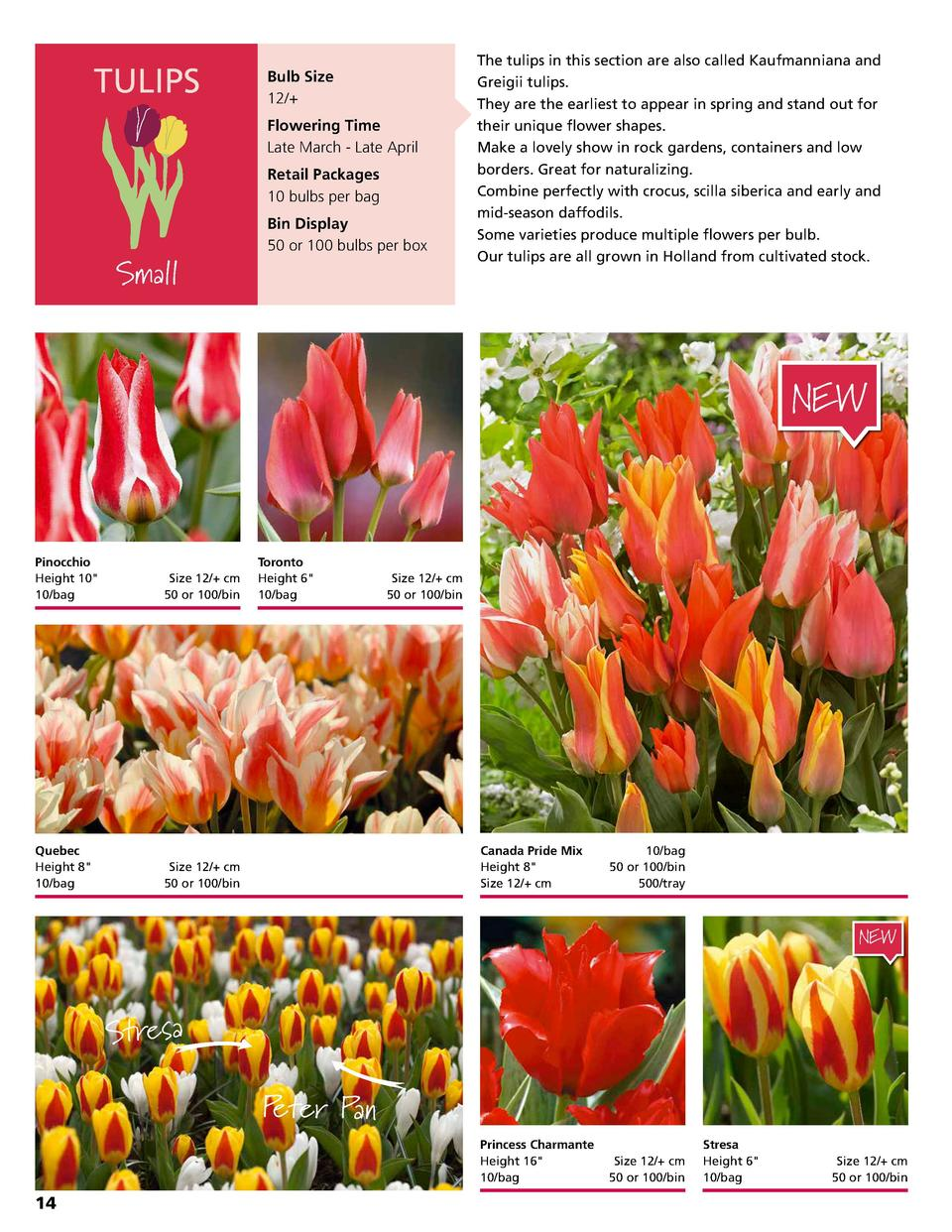 TULIPS  Bulb Size 12   Flowering Time Late March - Late April Retail Packages 10 bulbs per bag Bin Display 50 or 100 bulbs...