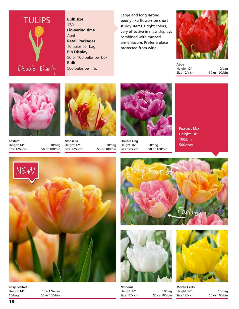 TULIPS  Double Early  Foxtrot Height 14      Size 12   cm    10 bag 50 or 100 bin  Bulb size 12   Flowering time April Ret...