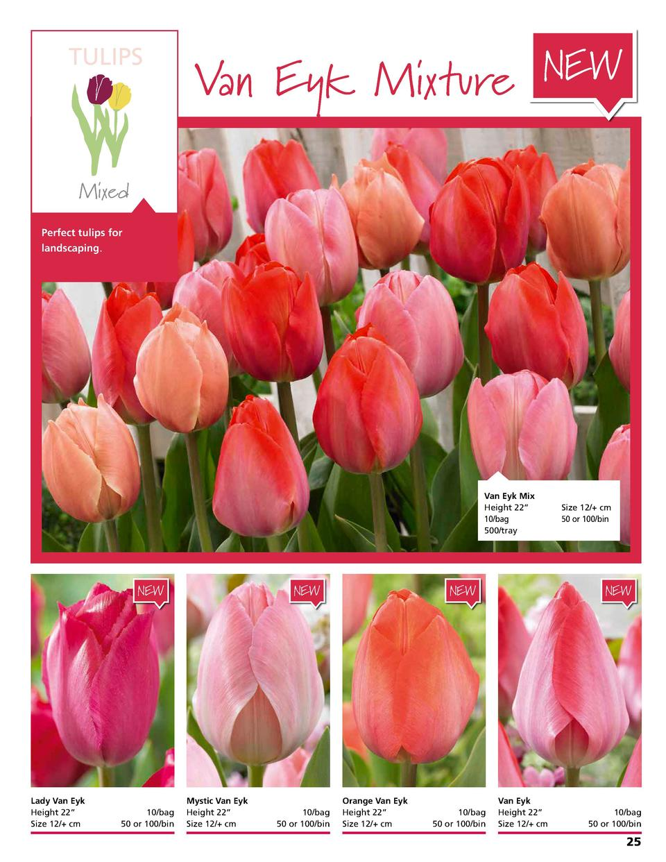 TULIPS  Van Eyk Mixture NEW  Mixed Perfect tulips for landscaping.  Van Eyk Mix Height 22      10 bag   500 tray  NEW  Lad...