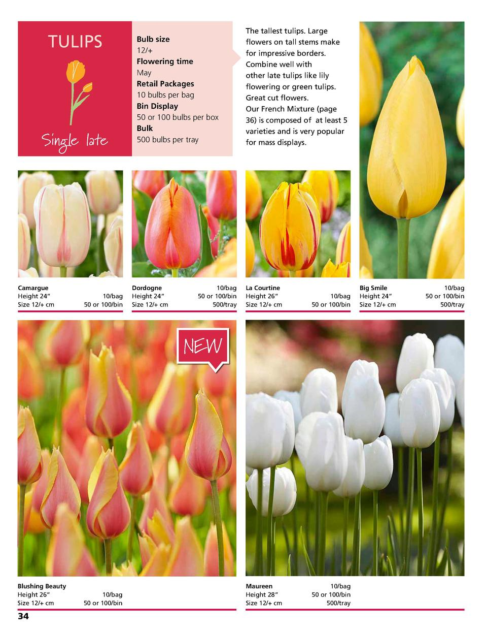 TULIPS  Single late  Camargue Height 24     Size 12   cm    10 bag 50 or 100 bin  Bulb size 12   Flowering time May Retail...