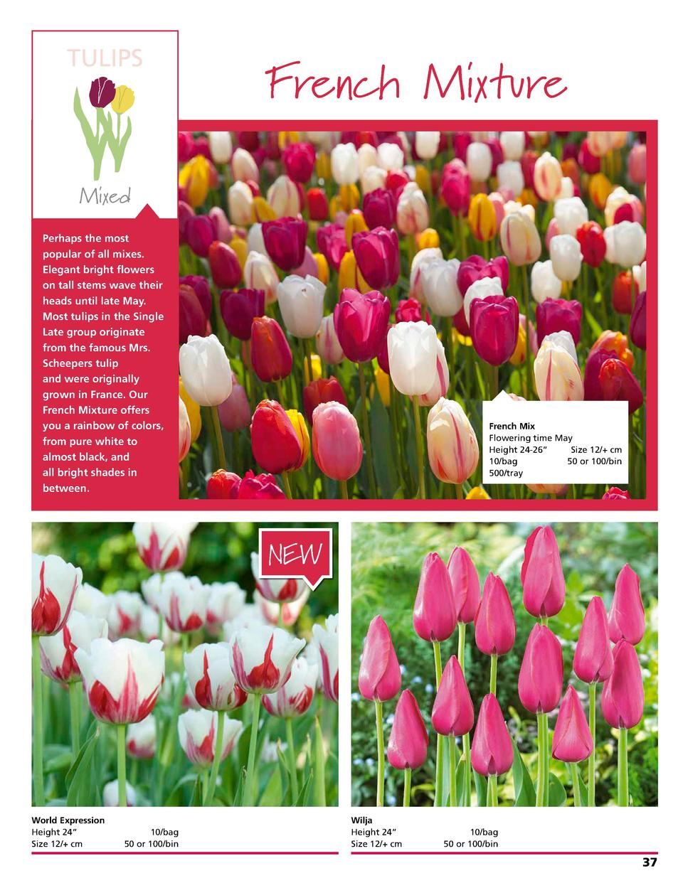 TULIPS  French Mixture  Mixed Perhaps the most popular of all mixes. Elegant bright flowers on tall stems wave their heads...