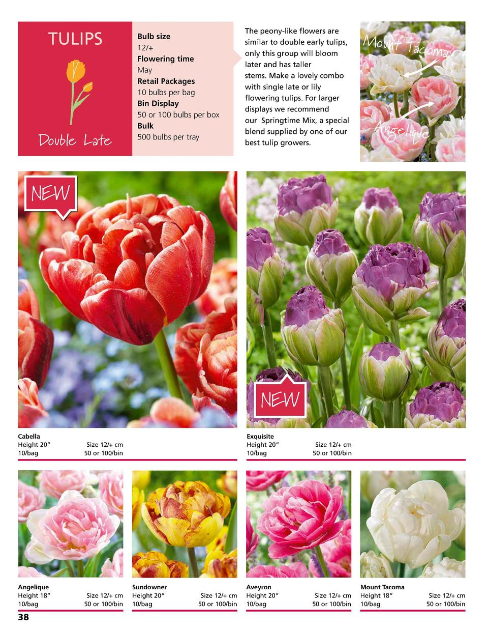 TULIPS  Double Late  Bulb size 12   Flowering time May Retail Packages 10 bulbs per bag Bin Display 50 or 100 bulbs per bo...