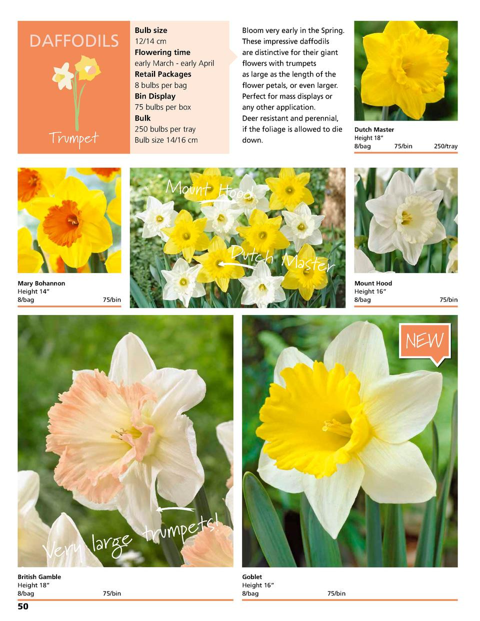 DAFFODILS  Trumpet  Bulb size 12 14 cm Flowering time early March - early April Retail Packages 8 bulbs per bag Bin Displa...