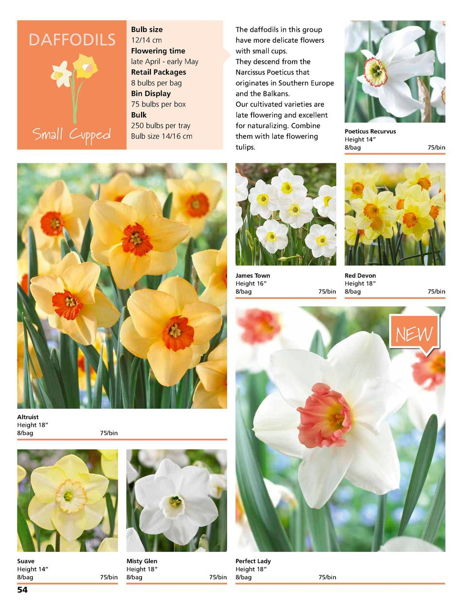DAFFODILS  Small Cupped  Bulb size 12 14 cm Flowering time late April - early May Retail Packages 8 bulbs per bag Bin Disp...
