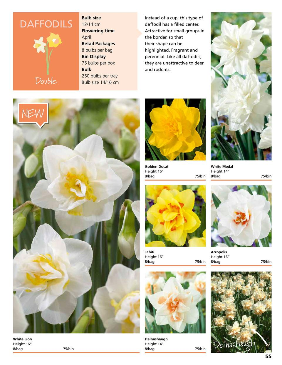 DAFFODILS  Double  Bulb size 12 14 cm Flowering time April Retail Packages 8 bulbs per bag Bin Display 75 bulbs per box Bu...
