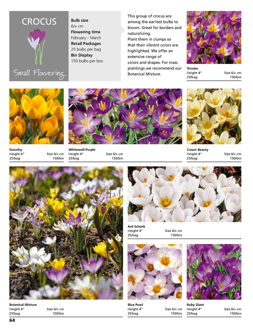 CROCUS  Bulb size 6   cm Flowering time February - March Retail Packages 25 bulbs per bag Bin Display 150 bulbs per box  S...