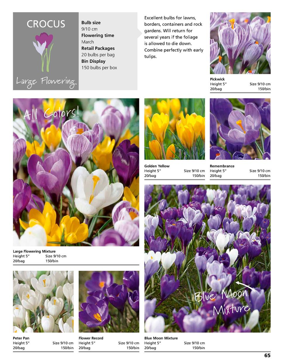 CROCUS  Bulb size 9 10 cm Flowering time March Retail Packages 20 bulbs per bag Bin Display 150 bulbs per box  Excellent b...