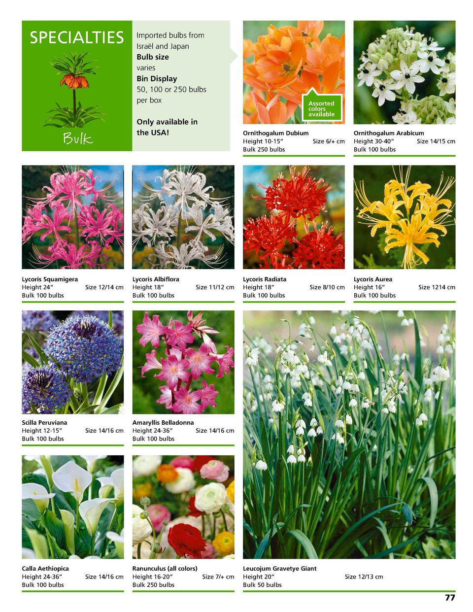SPECIALTIES  Bulk  Imported bulbs from Isra  l and Japan Bulb size varies Bin Display 50, 100 or 250 bulbs per box Only av...