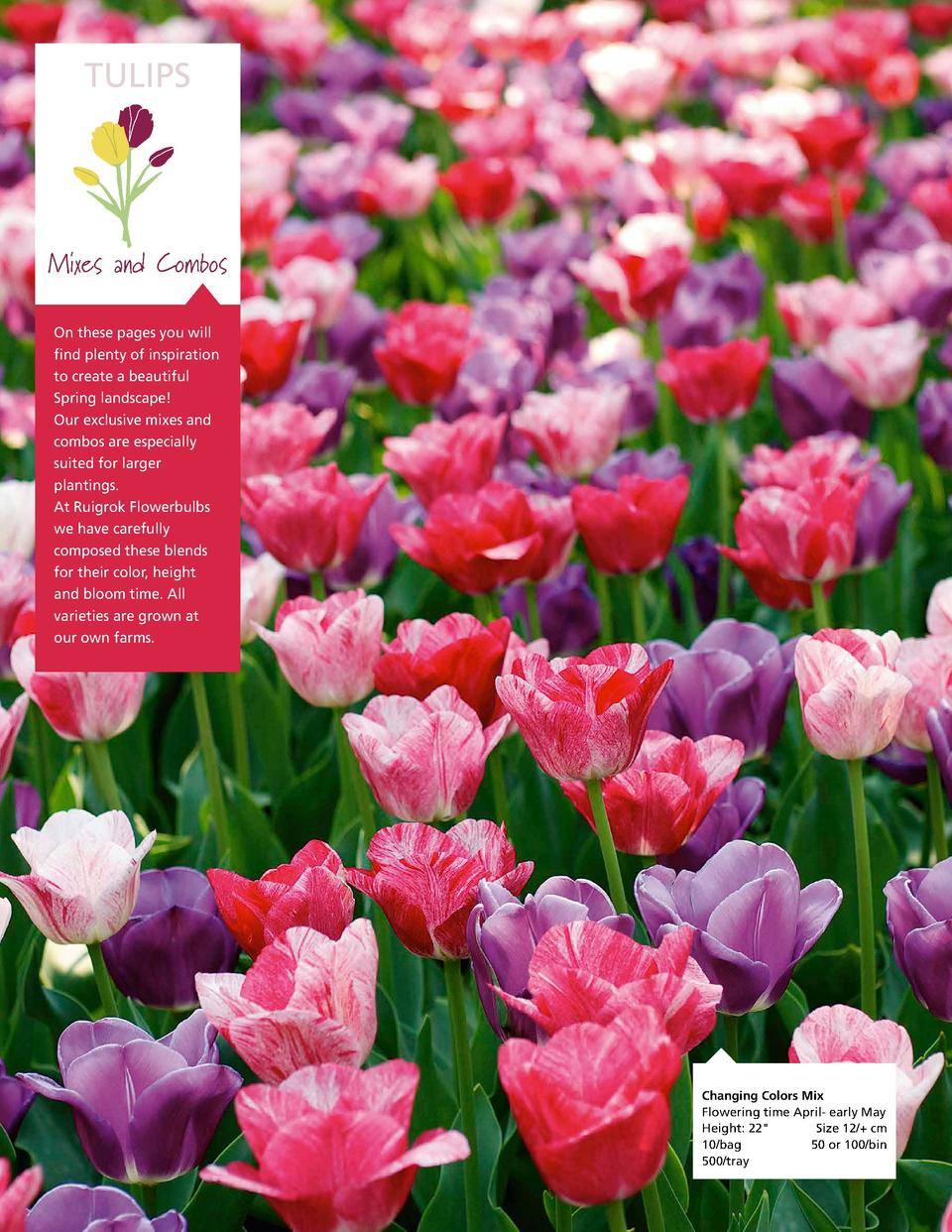 TULIPS  Mixes and Combos On these pages you will find plenty of inspiration to create a beautiful Spring landscape  Our ex...