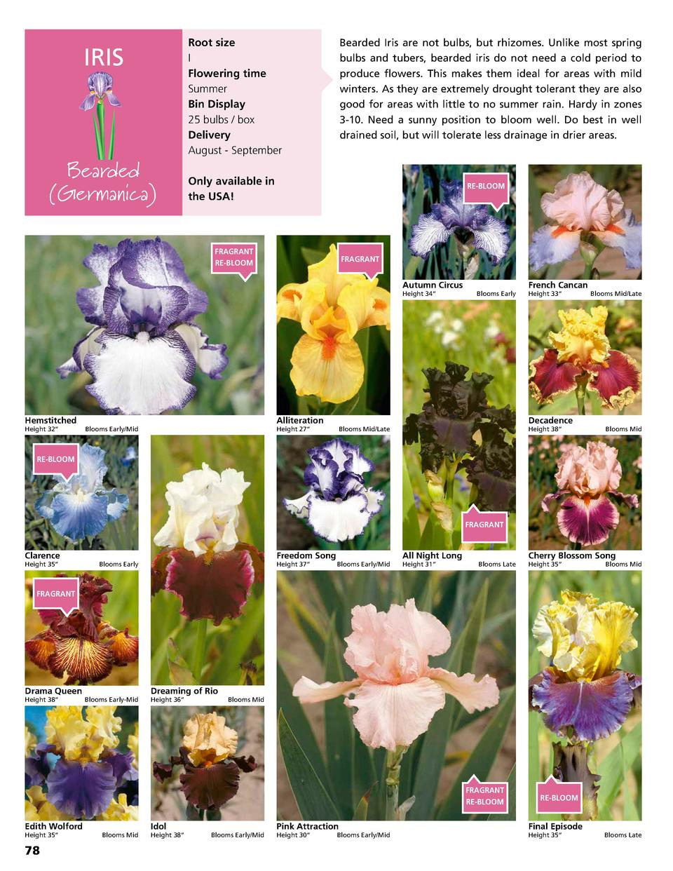 Root size I Flowering time Summer Bin Display 25 bulbs   box Delivery August - September  IRIS  Bearded  Germanica   Beard...