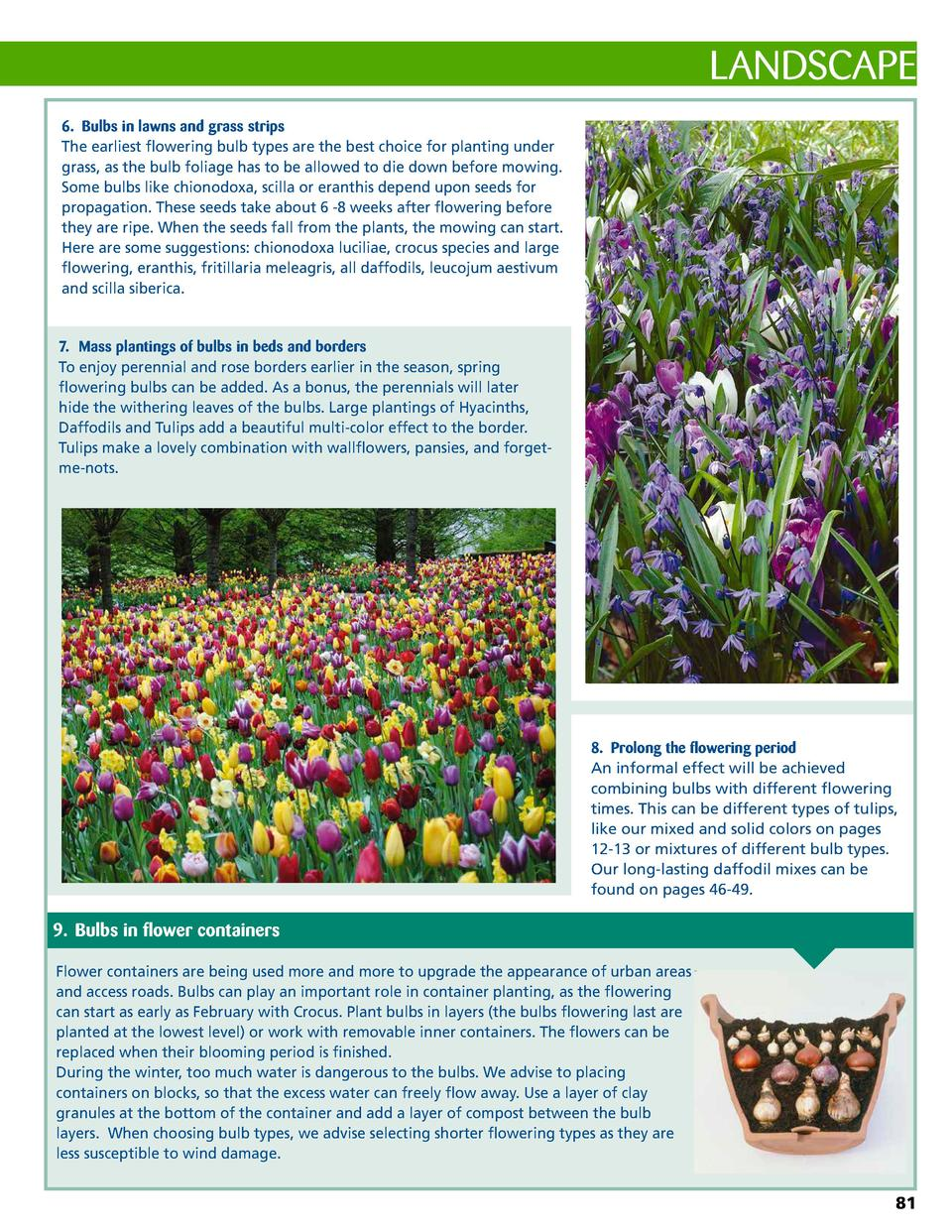 LANDSCAPE 6.  Bulbs in lawns and grass strips The earliest flowering bulb types are the best choice for planting under gra...