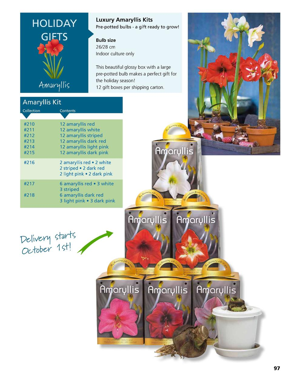 HOLIDAY GIFTS  Amaryllis  Luxury Amaryllis Kits Pre-potted bulbs - a gift ready to grow   Bulb size 26 28 cm Indoor cultur...