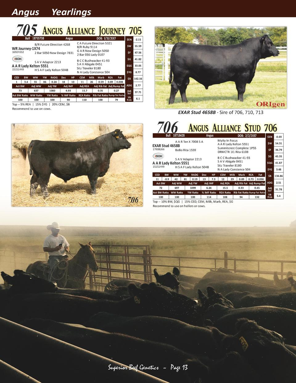 Angus  Yearlings  705 Angus Alliance Journey 705 Bull 18735738  Angus  DOB  1 31 2017  C A Future Direction 5321 B R Ruby ...