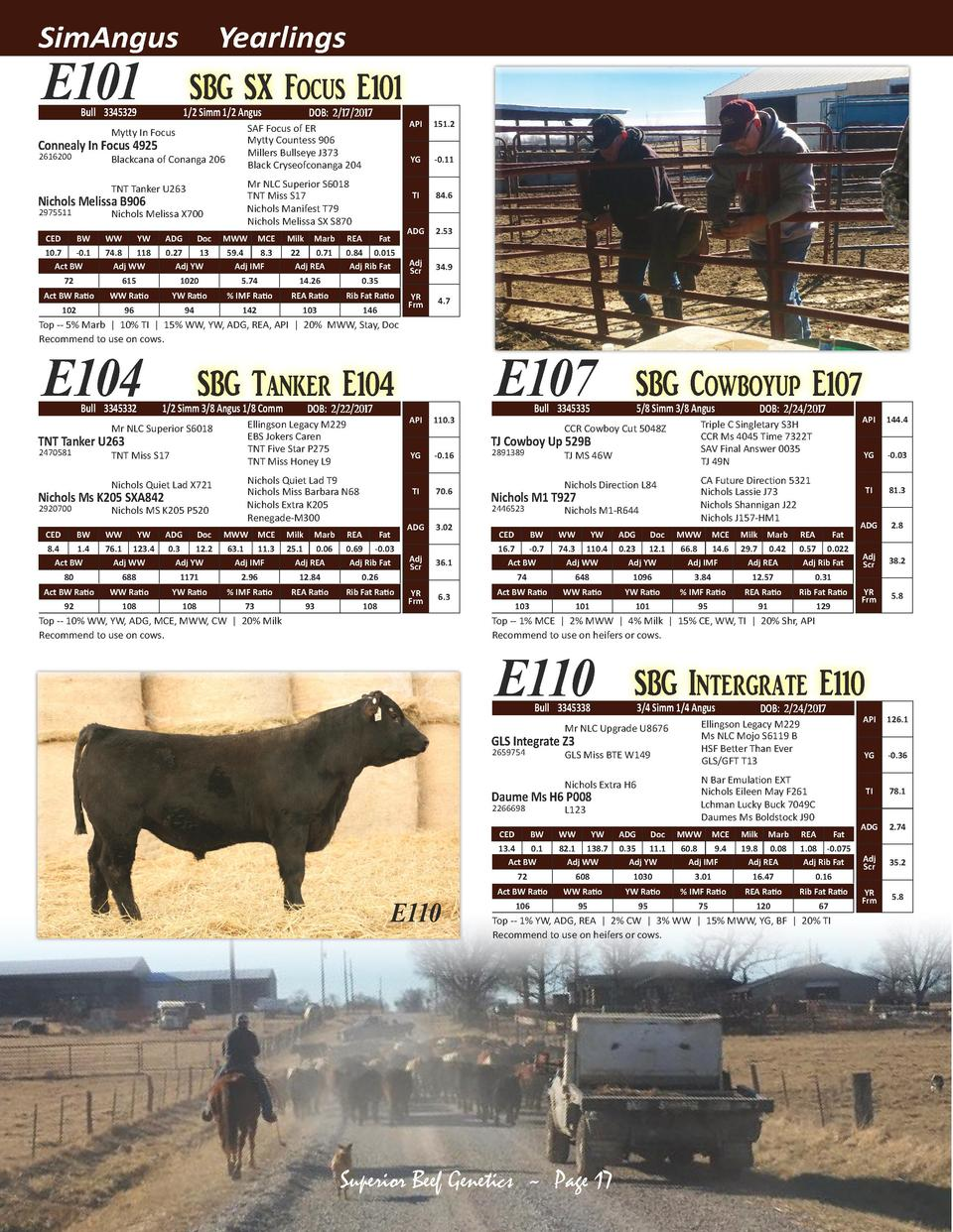 SimAngus  Yearlings  E101  SBG SX Focus E101  Bull 3345329  1 2 Simm 1 2 Angus  Mytty In Focus  Connealy In Focus 4925 261...