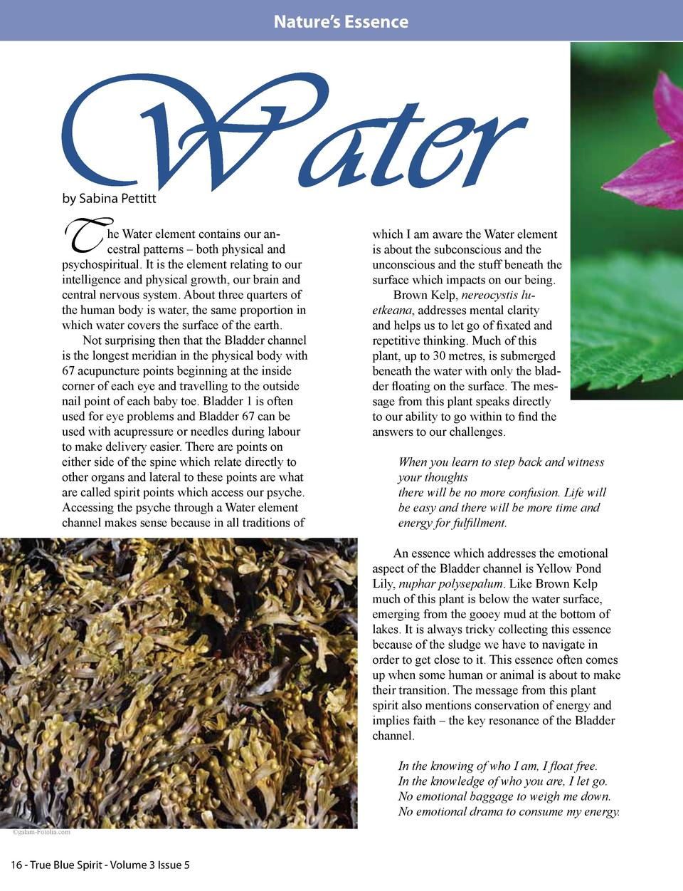 Nature   s Essence  Water by Sabina Pettitt  T  he Water element contains our ancestral patterns     both physical and psy...