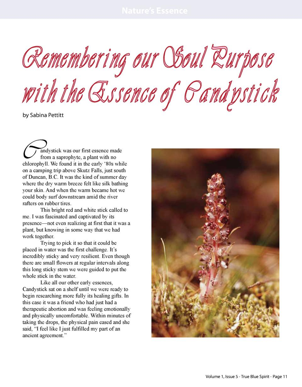 Nature   s Essence  Remembering our Soul Purpose with the Essence of Candystick by Sabina Pettitt  C  andystick was our fi...