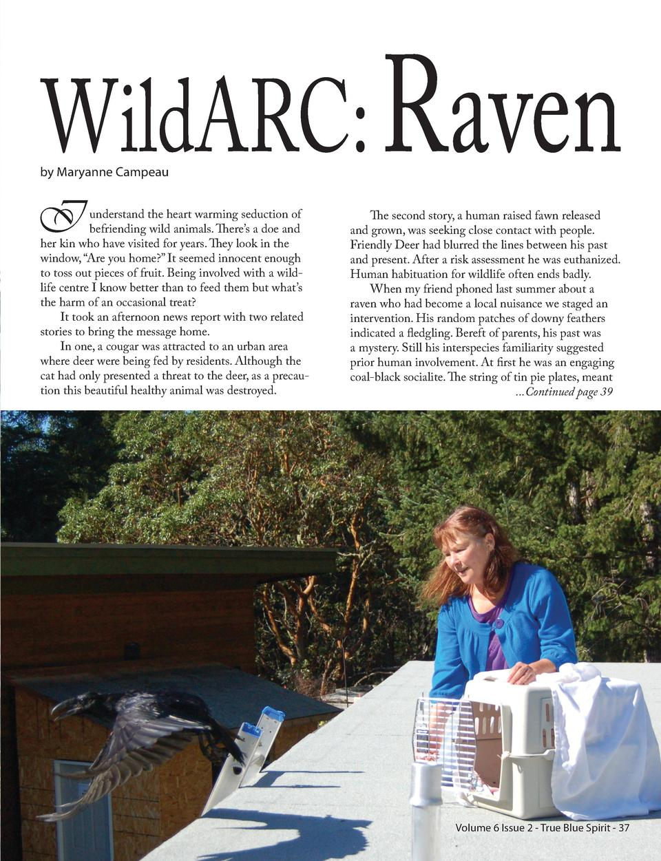 WildARC  Raven  by Maryanne Campeau  I  understand the heart warming seduction of befriending wild animals. There   s a do...