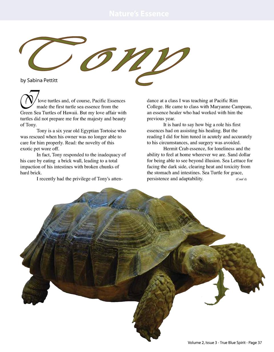 Nature   s Essence  Tony by Sabina Pettitt  I  love turtles and, of course, Pacific Essences made the first turtle sea ess...