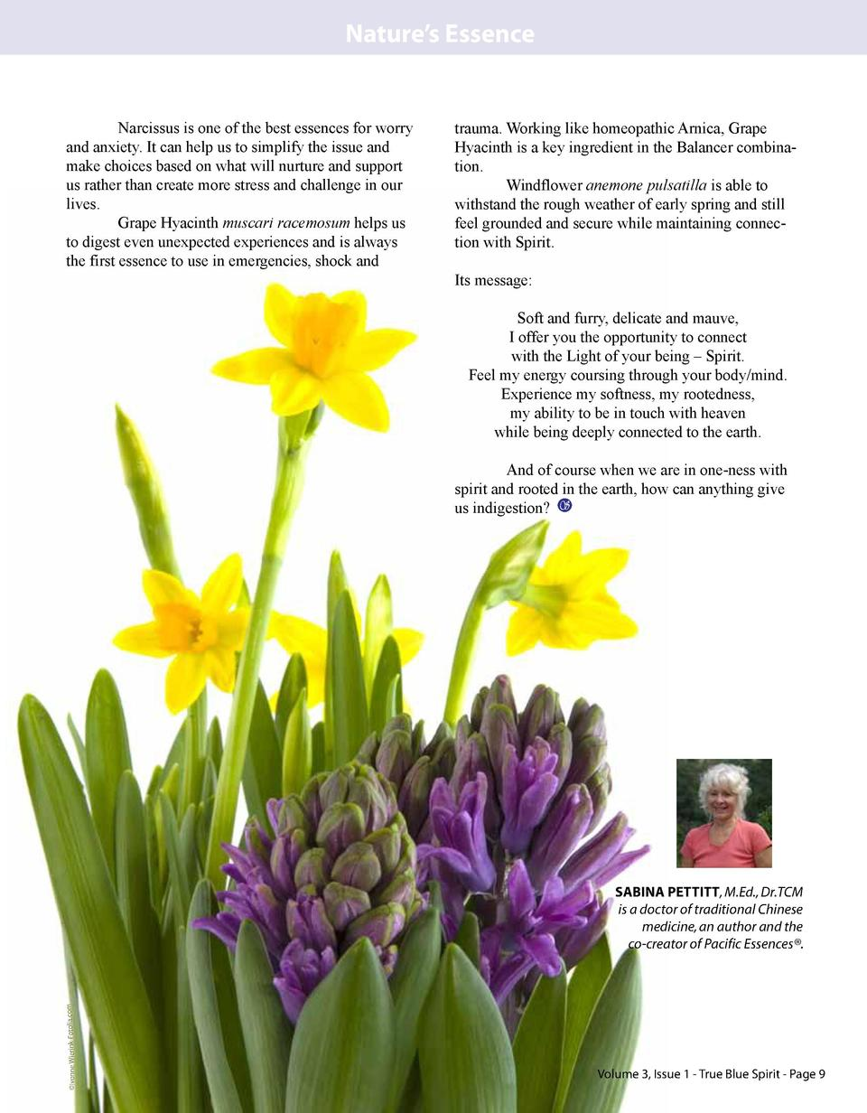 Nature   s Essence  Narcissus is one of the best essences for worry and anxiety. It can help us to simplify the issue and ...