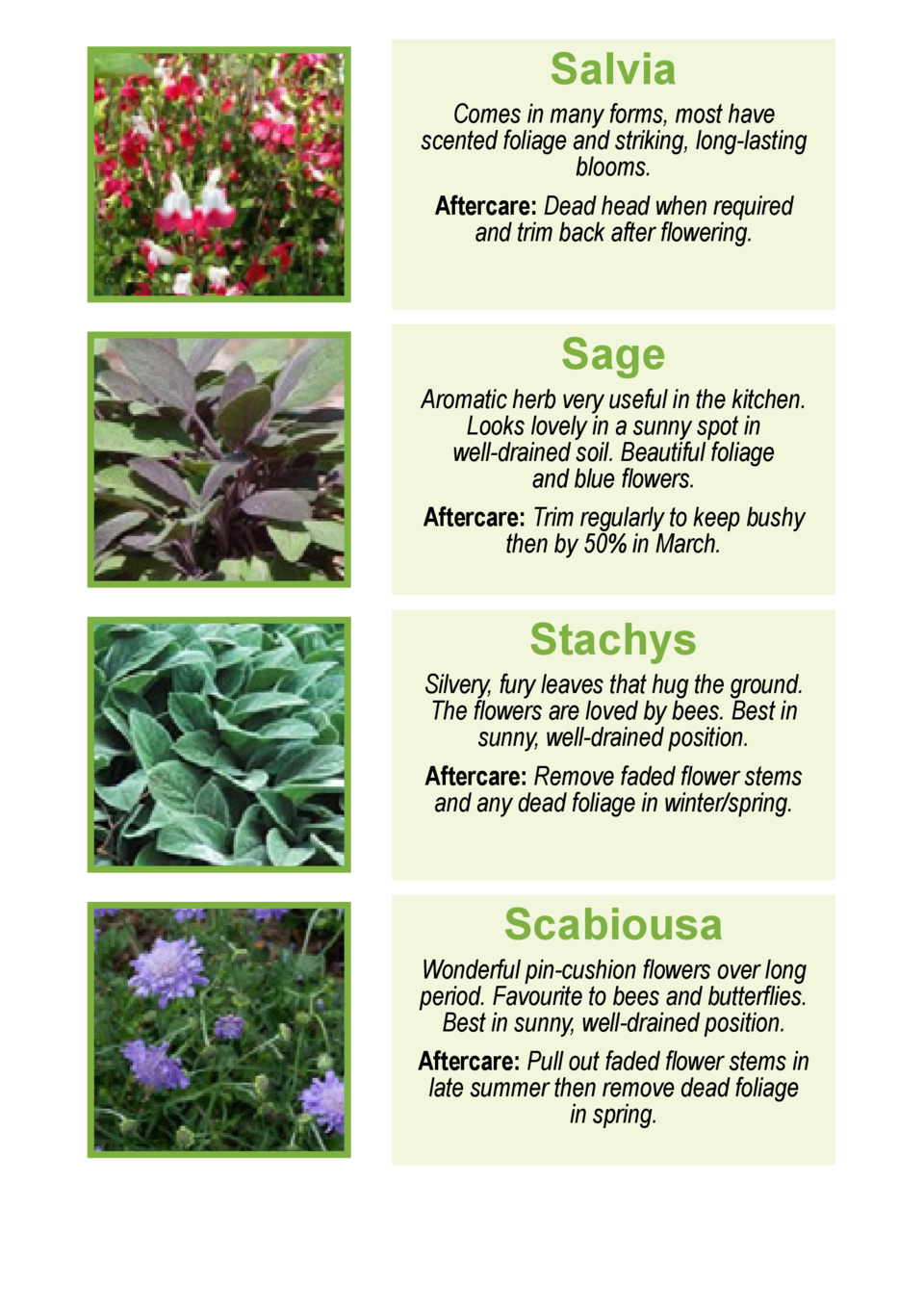 Salvia  Comes in many forms, most have scented foliage and striking, long-lasting blooms. Aftercare  Dead headwhen require...