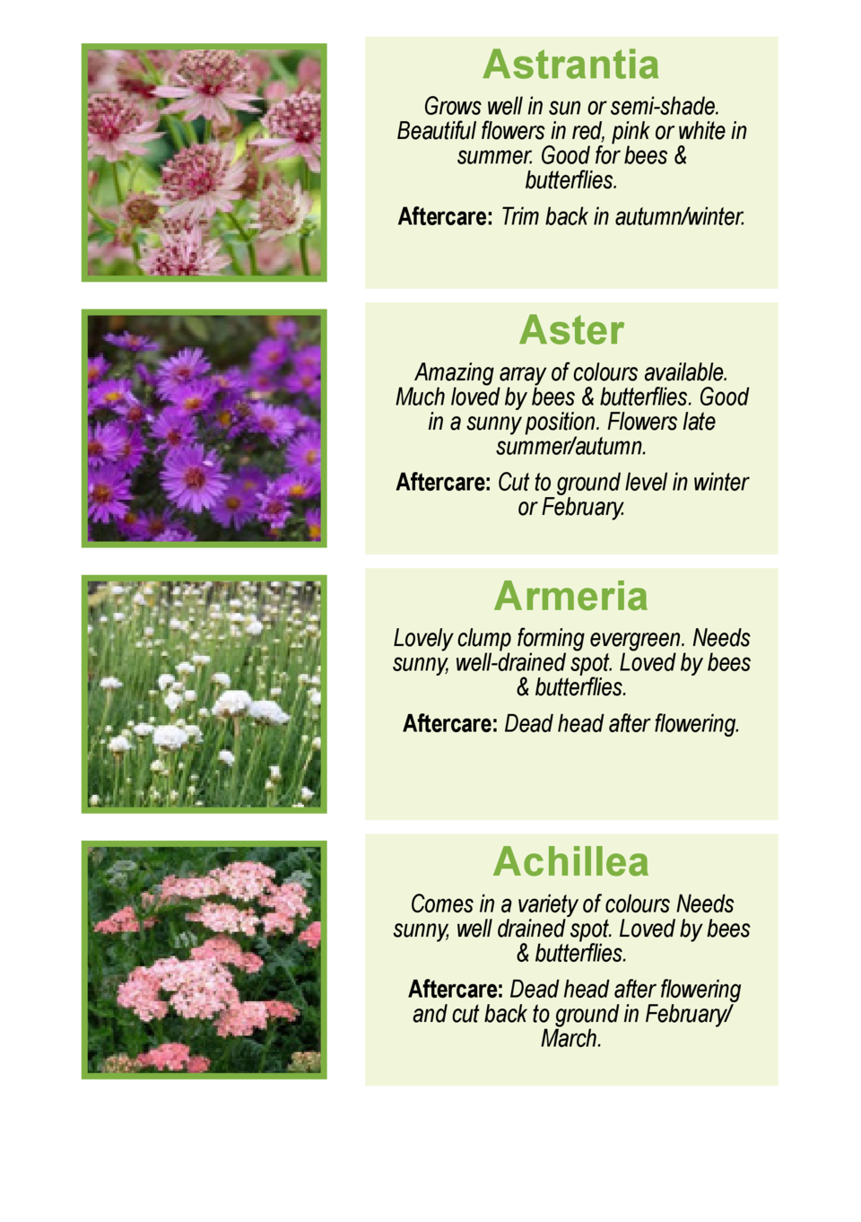 Astrantia  Grows well in sun or semi-shade. Beautiful flowers in red, pink or white in early summer.Good for bees   butter...