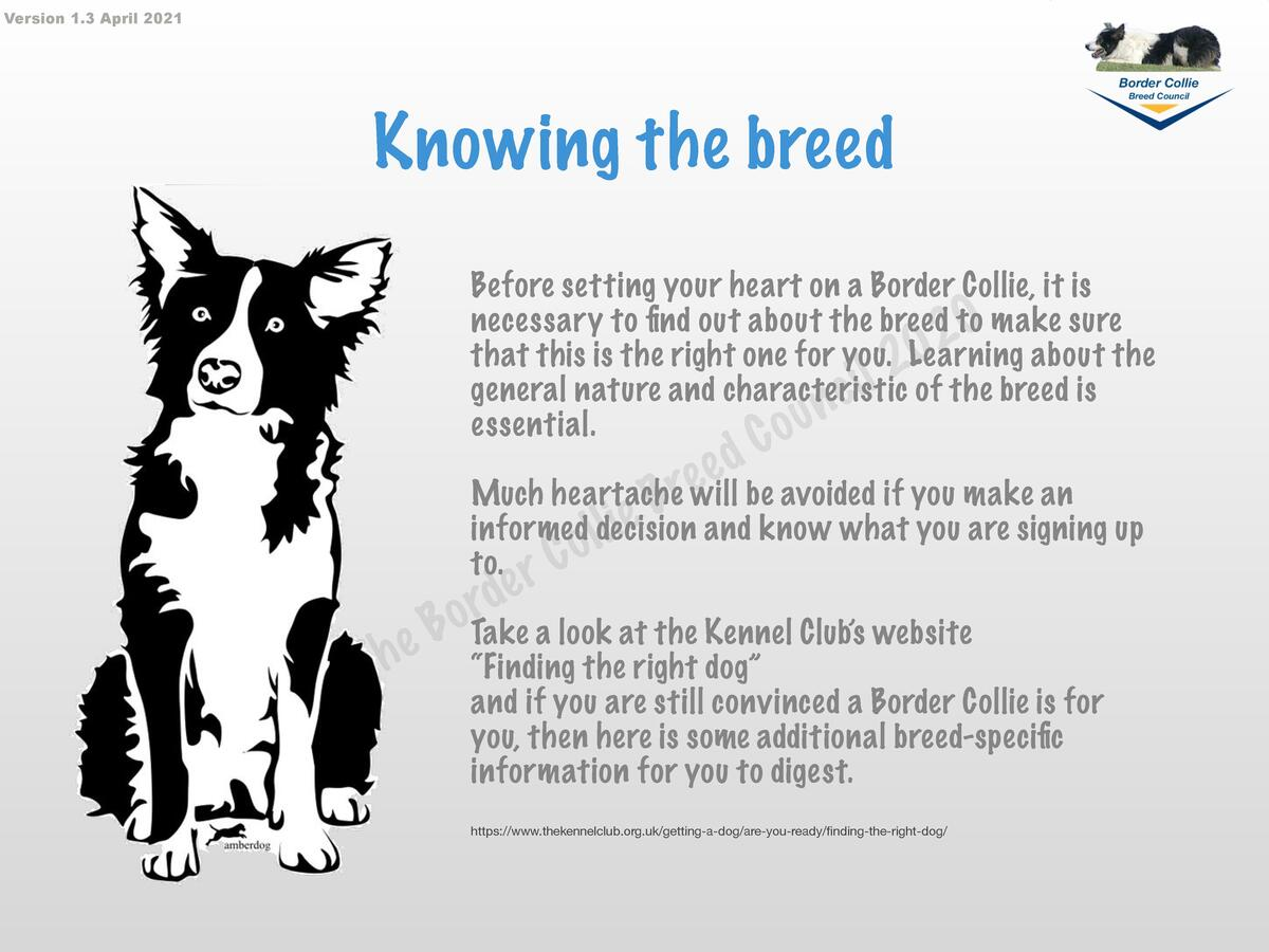 Version 1.3 April 2021  Knowing the breed Before setting your heart on a Border Collie, it is necessary to find out about ...