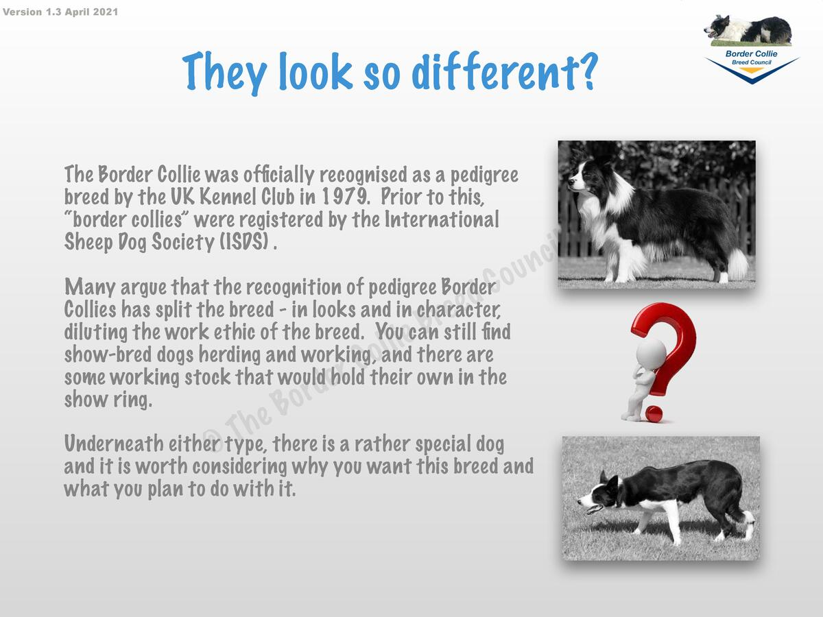 Version 1.3 April 2021  They look so different  The Border Collie was officially recognised as a pedigree breed by the UK ...