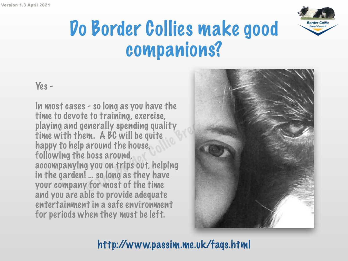 Version 1.3 April 2021  Do Border Collies make good companions  Yes In most cases - so long as you have the time to devote...